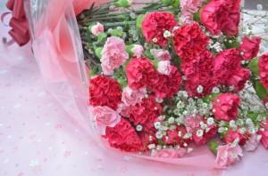 carnation1