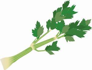 celery02
