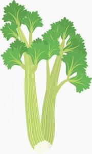 celery03