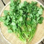 コリアンダーの驚くべき効能&家庭菜園での育て方