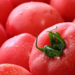トマトの育て方は、これが一番!!